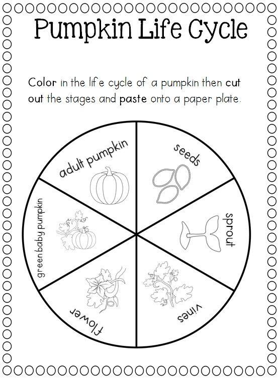 Pumpkin Life Cycle Worksheet Educationcom - satukisinfo