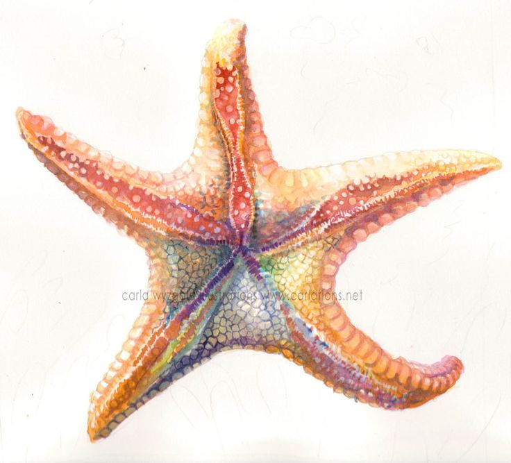 Rainbow Starfish art print by carlationsart on Etsy, $5.00 Rainbow Rose Drawing