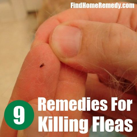 What Home Remedy Kills Fleas On Cats