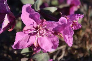 nunavut flower and bird