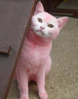 Pink puss!