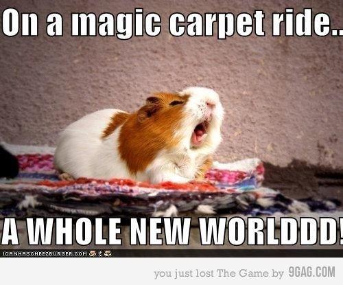 A guinea-pig riding the magic carpet! :)