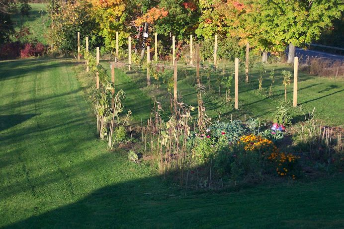 Backyard Vineyard Ideas : Pin by Lindsey Graves on Backyard Designs  Pinterest