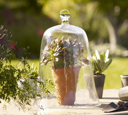 plants under glass all things glass pinterest
