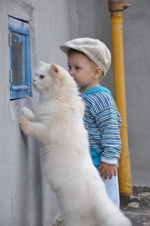 Sweet Curiosity