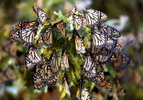 Swarm of Multi Colored...