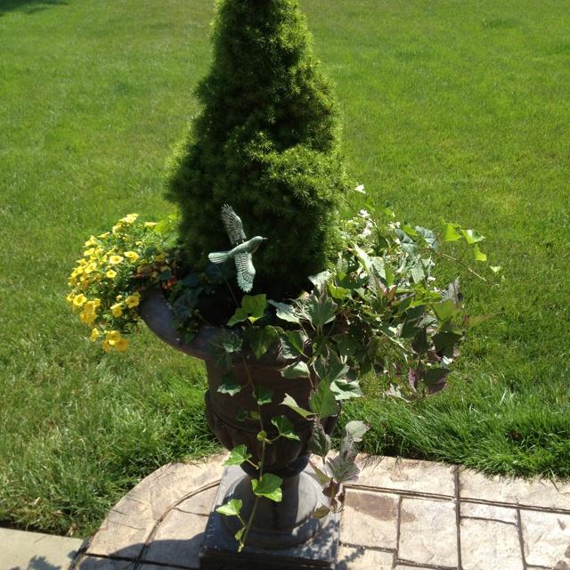 Urn planting