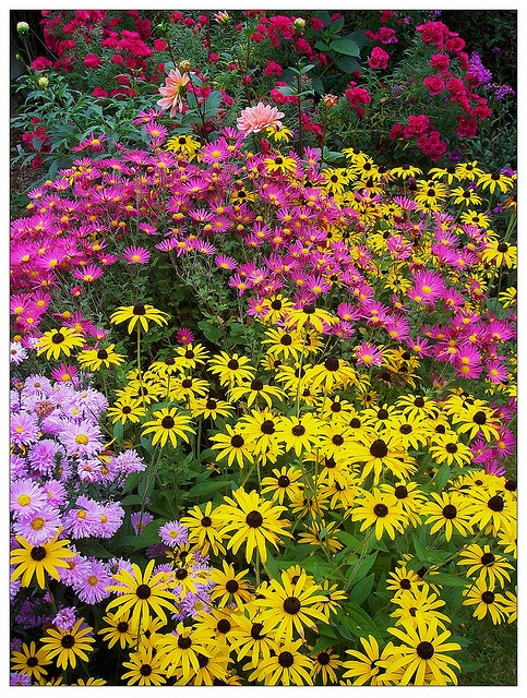 Late summer flowers by Robert Silverwood, via Flickr--next year, daisies, asters, Echinacea for late summer color!