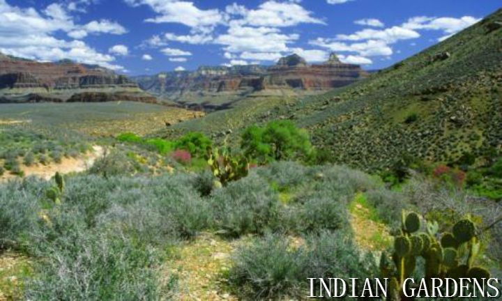Indian Gardens Grand Canyon