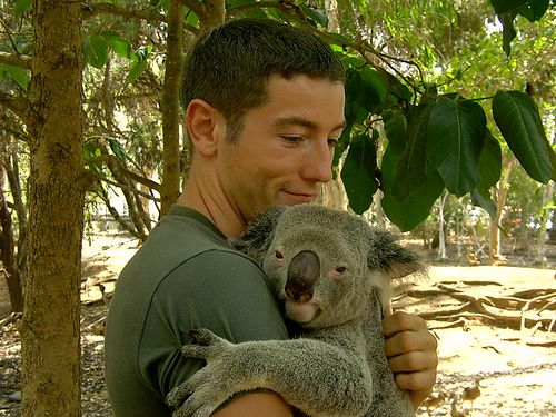 Koala hug | Animal friends | Pinterest - photo#5