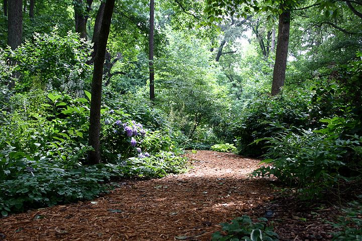 Mulch Path Backyard : mulch path  garden path  Pinterest