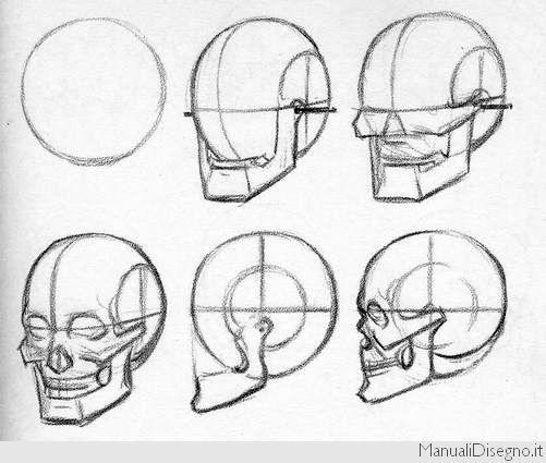 Как нарисовать череп начинающему поэтапно