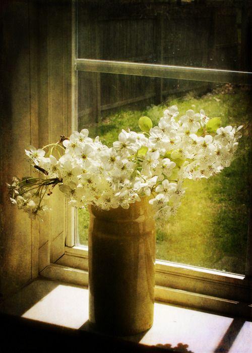 little white flowers; Ana Rosa