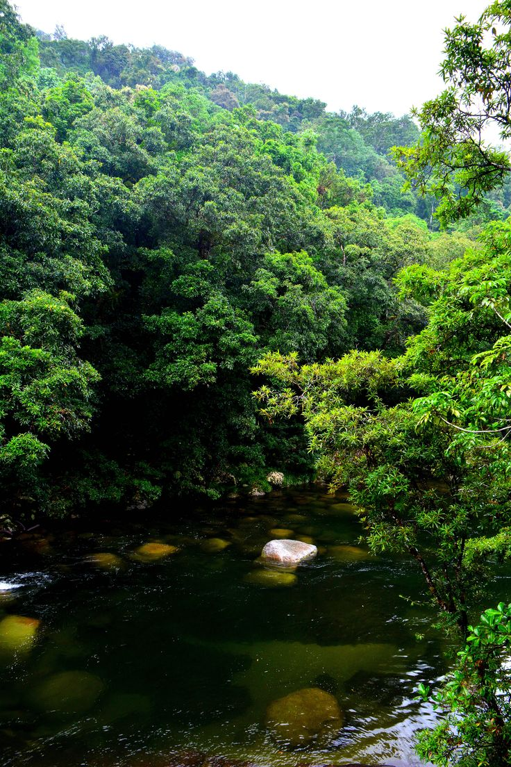 how to get to daintree rainforest from cairns