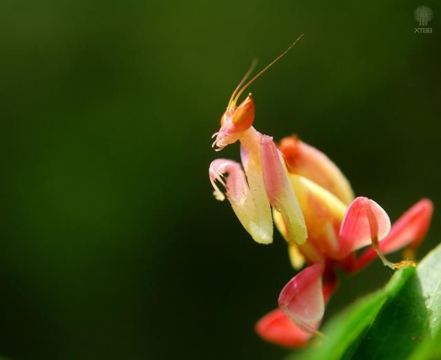 How to Take Care of a Praying Mantis 13 Steps with Pictures
