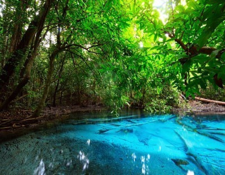 Pond In Jungle With Clear Blue Water Favorite Places