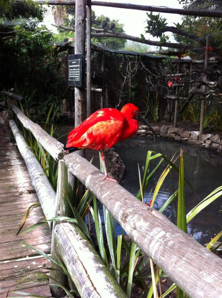 The World of Birds | Steenberg Blog