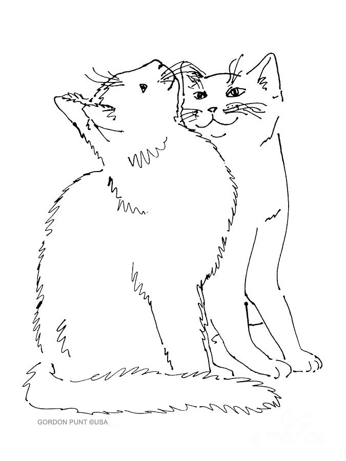 Contour Line Drawing Of A Cat : Line drawing art cat how to draw pinterest