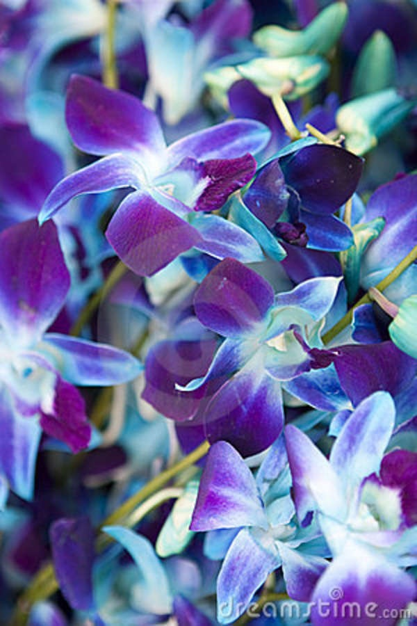 Purple and Blue orchids | Wedding Ideas | Pinterest