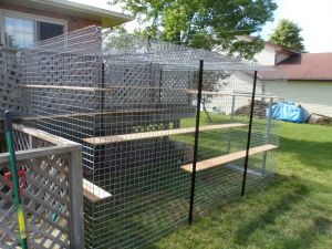 catio ideas arguments i have with cats pinterest