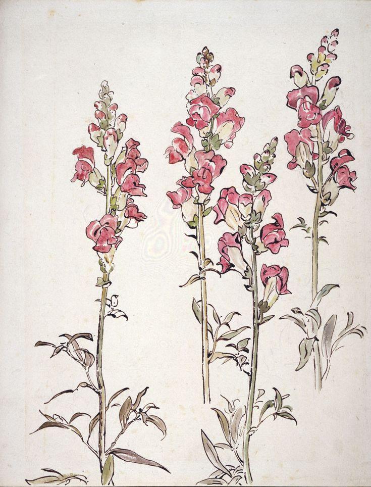Беатрис цветок