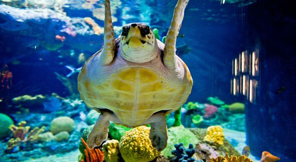 Turtle Aquarium Lisbon | RentTheSun