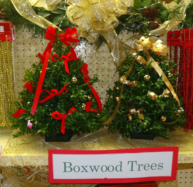 Decorated boxwood trees holiday time pinterest