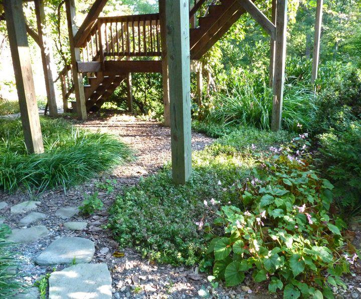 Under Deck Garden Ideas : Shade garden ideas under a deck minnesota photograph idea