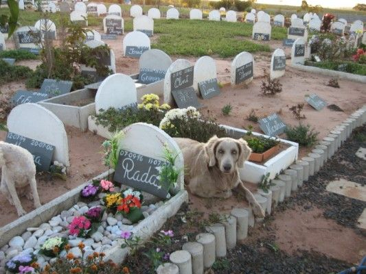 Dog lies on a grave in a pet cemetery