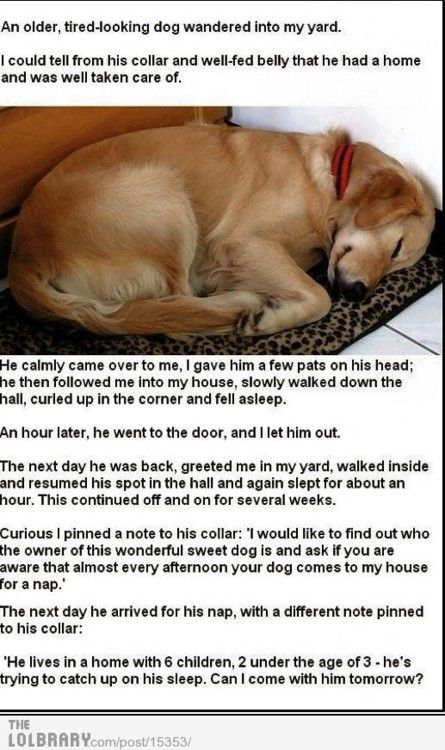 Chicken Soup for the Pet Lover's Soul..my favorite story