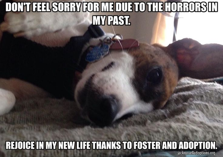 Jennifer and the three-time failure foster crew have been busy making memes to support adoption, foster and rescue as a whole! You can view and share them all from our website or download them all and share away! Meme's the Word!
