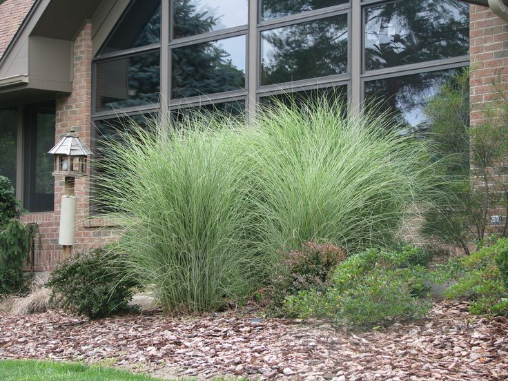 wild grasses in mulch xeriscape landscaping pinterest