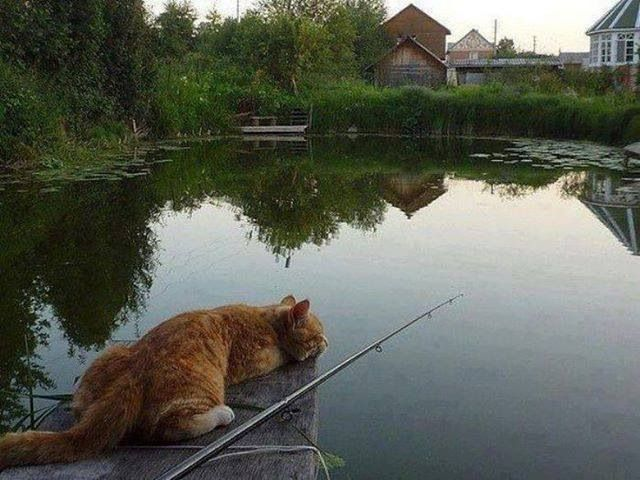 Waiting patiently kitties pinterest for Cat fishing 2