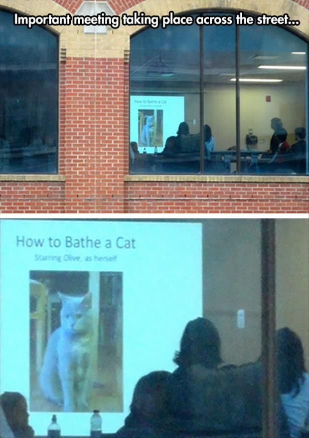 bathe a cat, funny work, office funny, workplace humor, how to bathe a cat office presentation