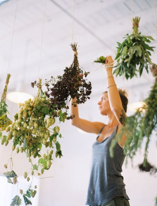 drying herbs #helpful #mltattoocare