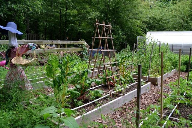 Backyard Barnyard : backyard farm in a subdivision  gardening ideas i love andor must t
