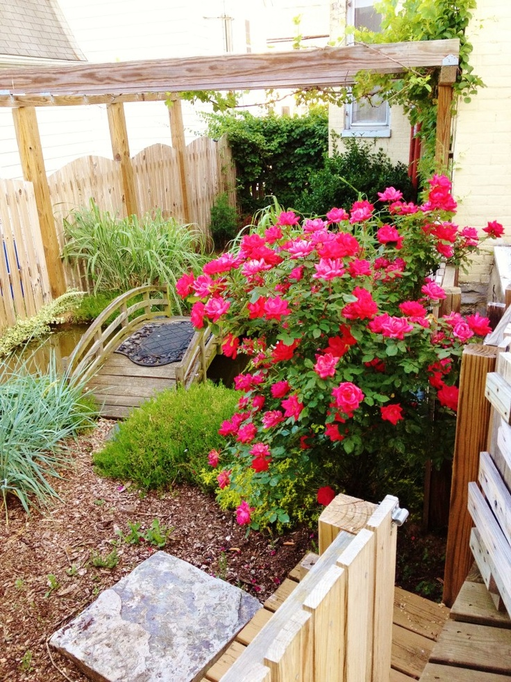 Small pond in side yard gardening ideas pinterest for Small side garden designs