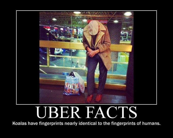 uber account statistics