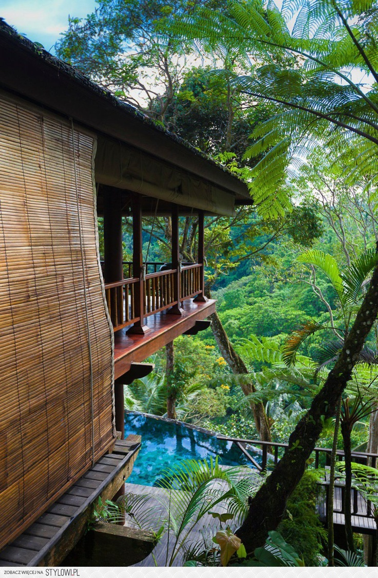 Jungle top house tree top hotels pinterest for Jungle house music