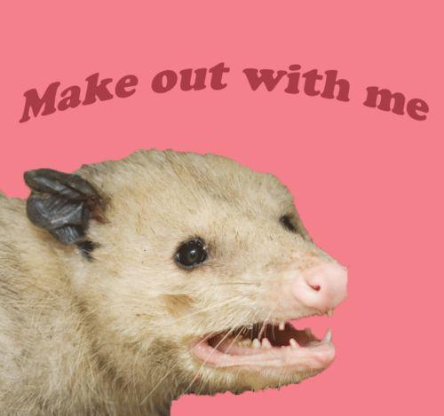 valentine day memes grumpy cat - possum Humorous
