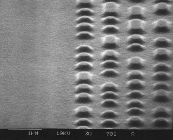 drosophila melanogaster lab report