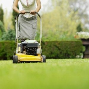 Got grass?  Great tips for choosing a lawn service!
