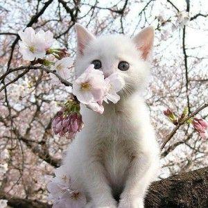 Várom a tavaszt.