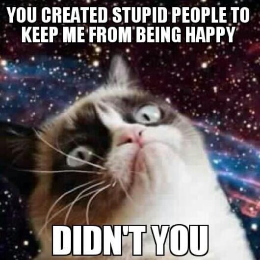 Cat Indepenent Meme