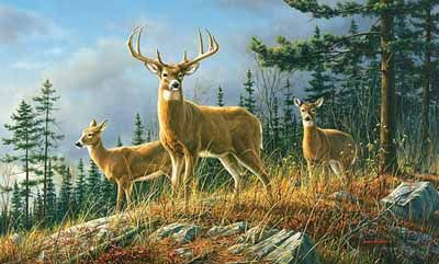Autumn whitetail deer wallpaper mural great pictures for Deer wallpaper mural