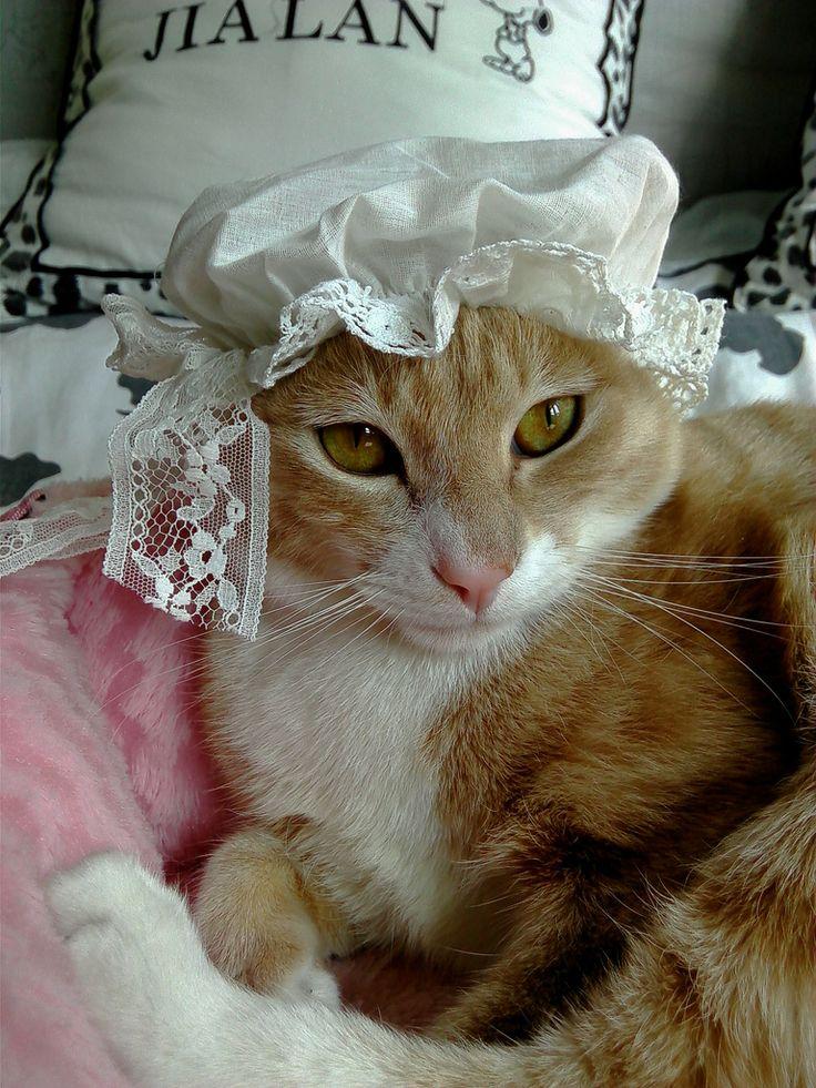 Grandma Cat In The Hat