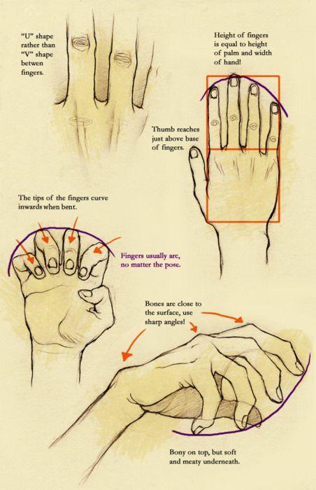 explicación sobre como dibujar las manos