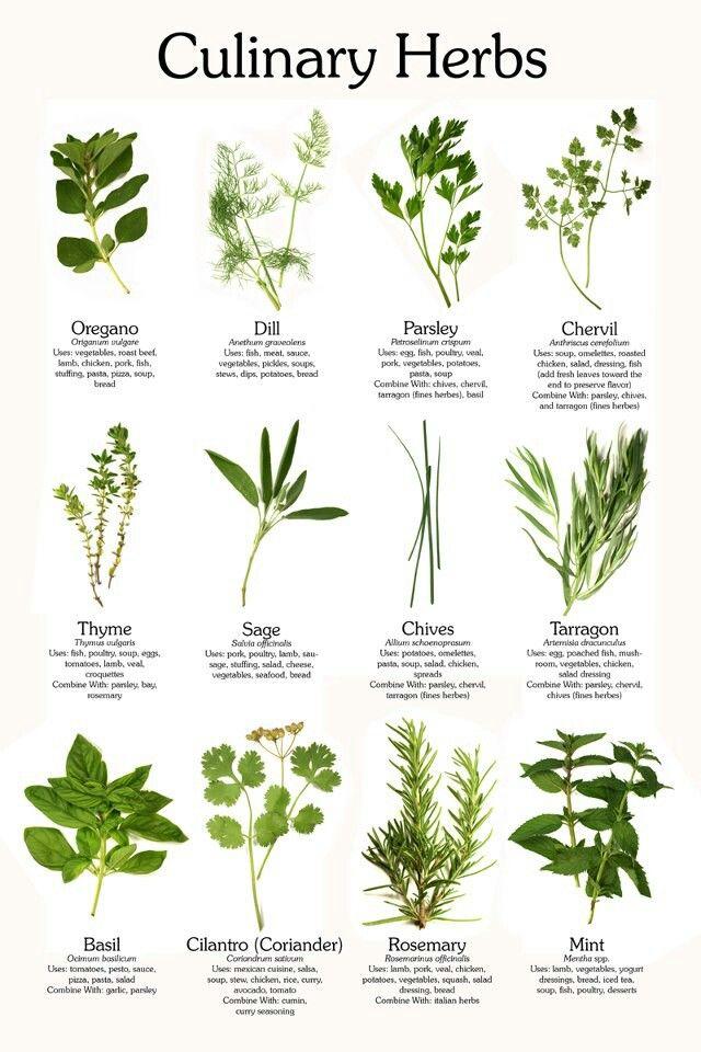 Edible Herb Garden Gardening Pinterest
