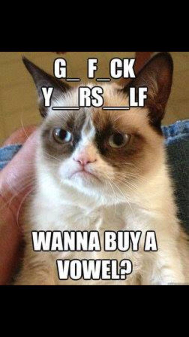 grumpy cat buy a vowel cats grumpy cat pinterest