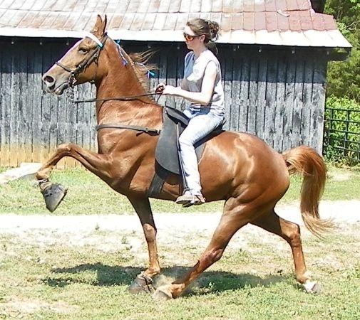 Equine Studies craigslist custom search